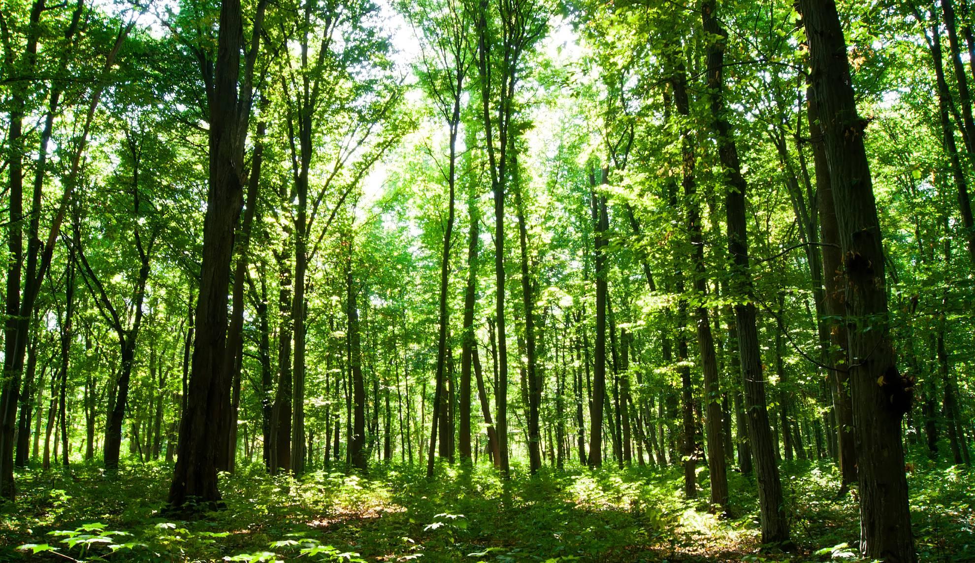 green-forest-PGZ7JGS (1)