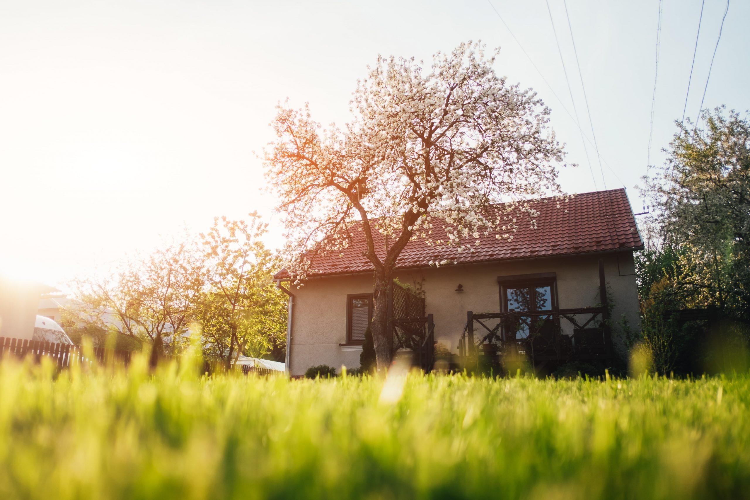 green-lawn-near-house-PE5RHLC-min