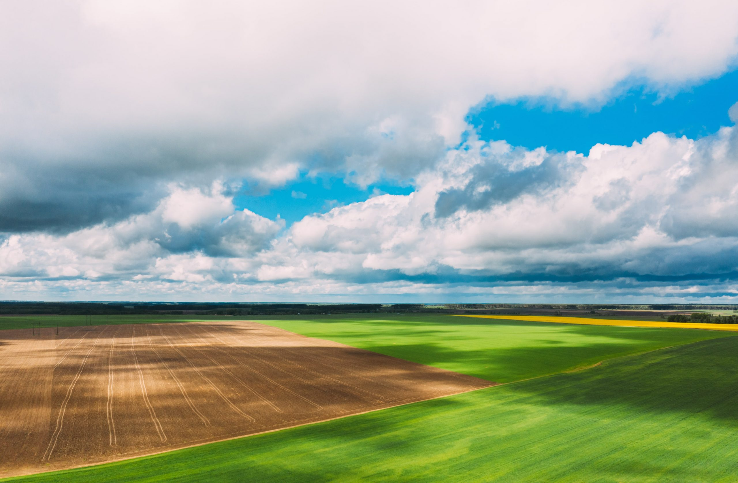 countryside-rural-green-field-landscape-with-young-X5Z2SN5